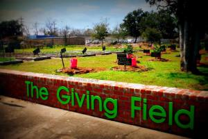 the giving field