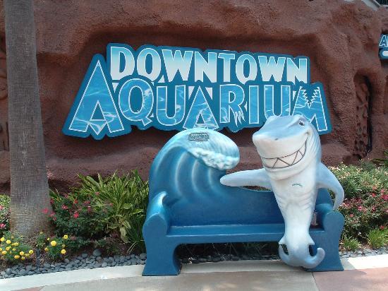 dowtown-aquarium