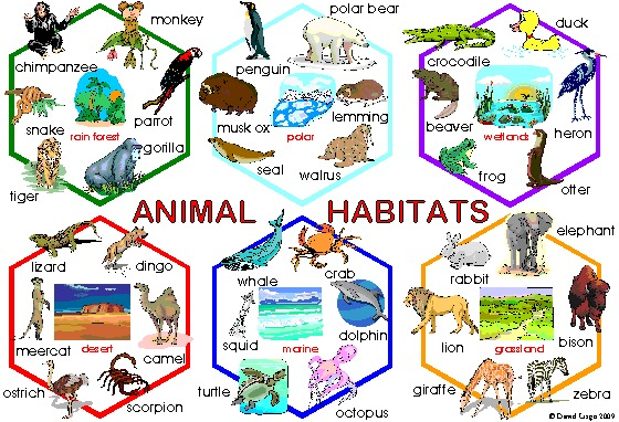 animal-20habitats-20poster